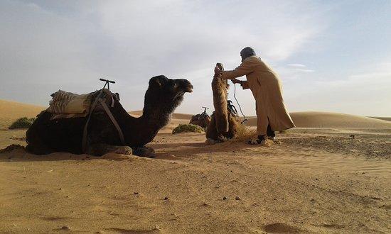4X4撒哈拉游照片