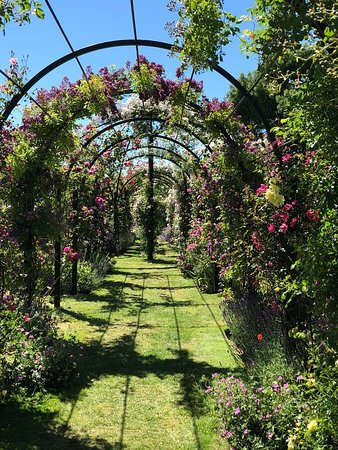 Attleborough, UK: IMG-20180622-WA0036_large.jpg