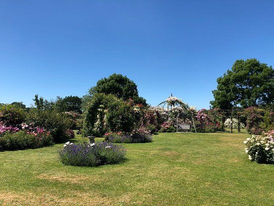 Attleborough, UK: IMG-20180622-WA0044_large.jpg