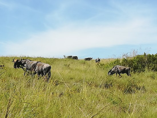 Lake Eland Game Reserve, South Africa: Plenty of animals to see