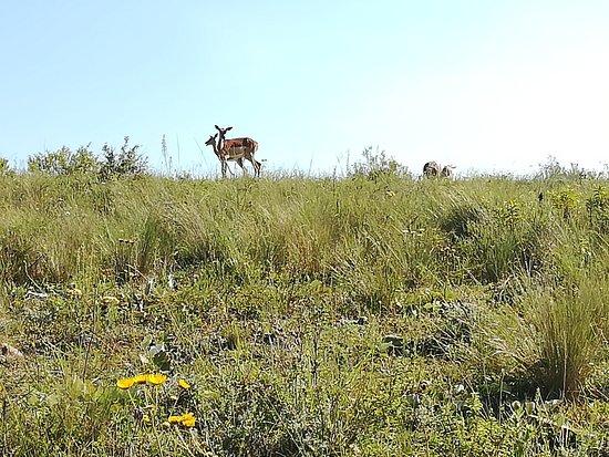 Lake Eland Game Reserve, South Africa: Priceless