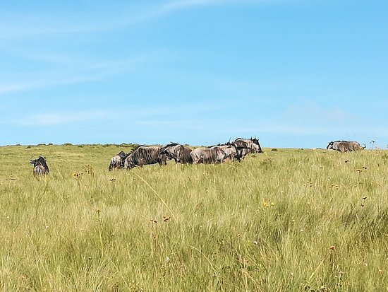 Lake Eland Game Reserve, South Africa: Final stretch and still not dissapointed