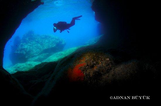 Blue World Diving Center照片