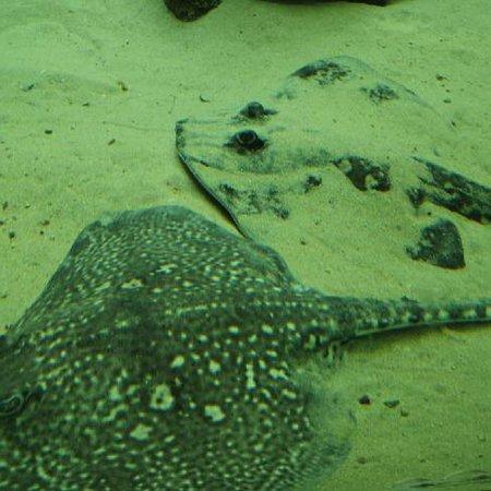 Aquarium Marin De Tregastel: photo4.jpg