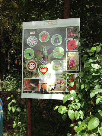 La Romana Province, สาธารณรัฐโดมินิกัน: Jungle farm - The long sory of Nature on the school boards