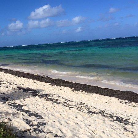 Caribe con algas