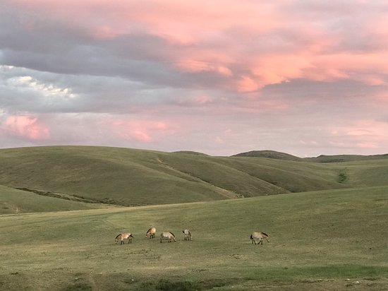 Hustai National Park: Wild horses of Hustai
