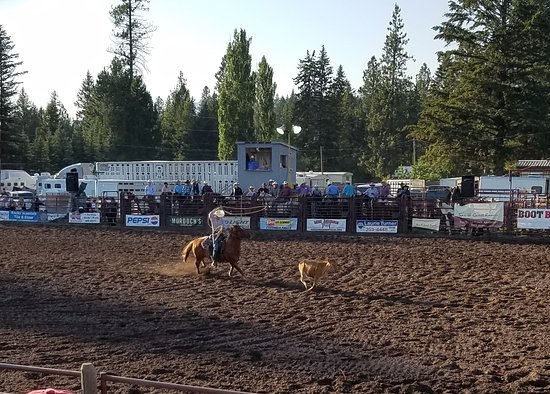 Marion, MT: local rodeo