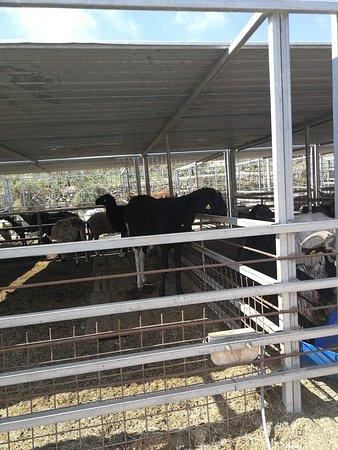 Dreams of Horses Farm Photo