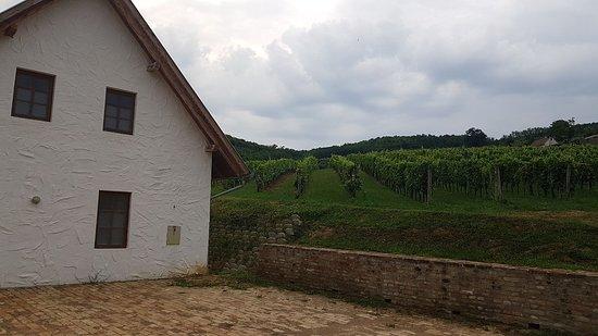 Szekszard, Hungary: IMG-20180709-WA0000_large.jpg