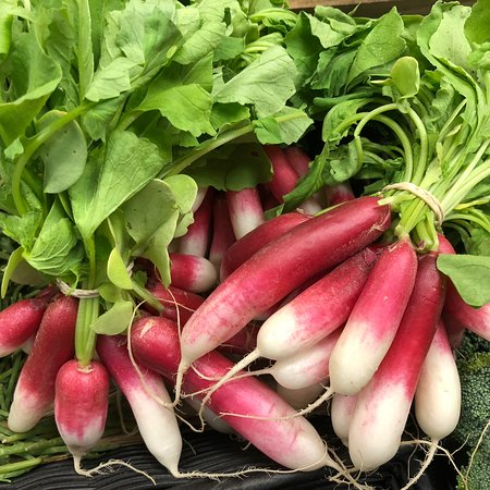Blue Hill, ME: Local radishes!