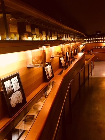 Cushing/Whitney Medical Library: the Cushing Center displays