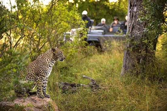 Camps Bay, Sudáfrica: The incredible Leopard - spotted on safari