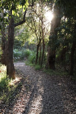 Eden, Australia: Walking in the forest
