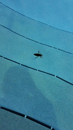 Great hotel, scary bugs!