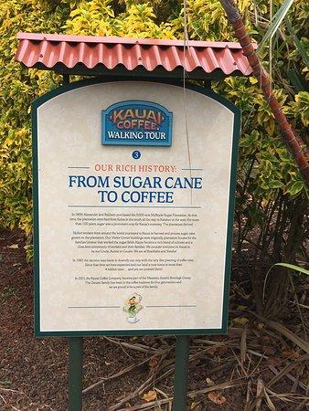 Kauai Coffee Company: Placa explicativa no cafezal sobre a a Companhia de Café Kauai