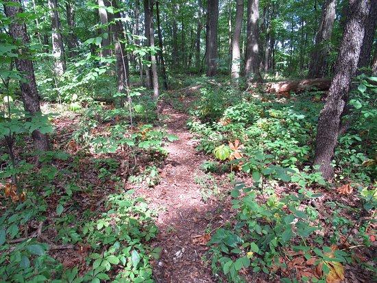 Lakewood Nature Area