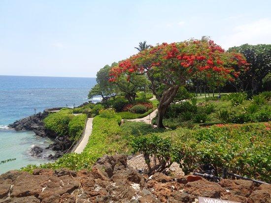 Mauna Kea Beach Resort Hotel Picture Of Mauna Kea Beach