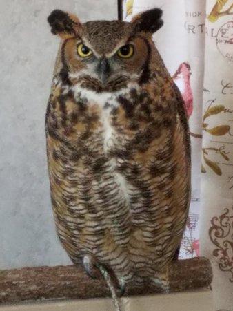 20180629 135049 Large Jpg Picture Of International Owl Center Houston Tripadvisor