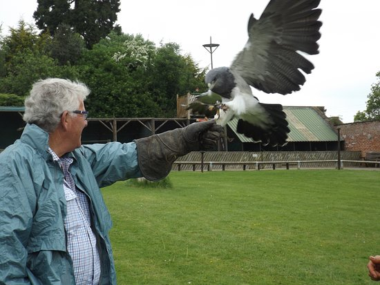 Unfortunately I Did Not Record The Names Of The Birds Picture Of Falconry Uk Thirsk Birds Of Prey Centre Tripadvisor