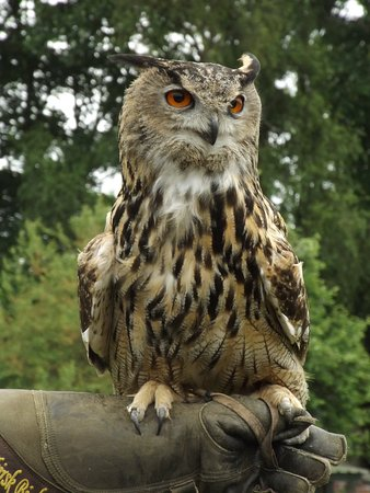 Falconry UK Thirsk Birds of Prey Centre: This owl was beautiful