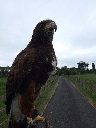 Falconry UK Thirsk Birds of Prey Centre: Hawk on one arm and camera in the other hand = photo