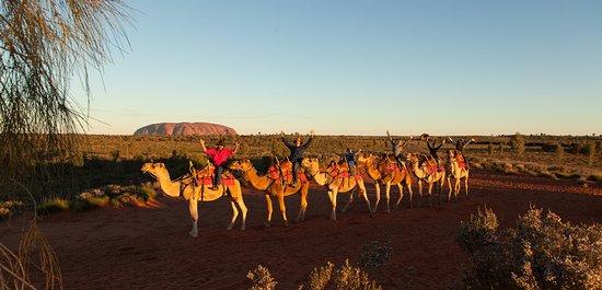 Uluru-Kata Tjuta National Park, Australien: Uluru Camel Tours infront of Uluru