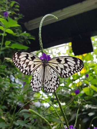 photo1.jpg - Picture of Victoria Butterfly Gardens, Central Saanich ...