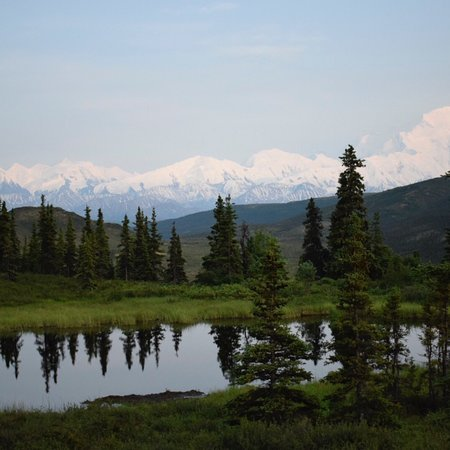 Camp Denali: photo1.jpg