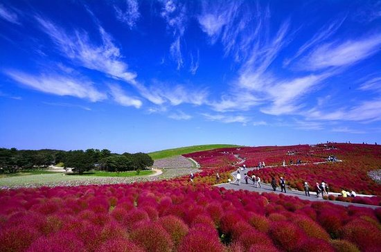 Day Trip to Hitachi Seaside Park from...