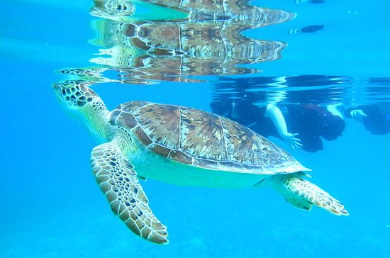 Kayak and Sea Turtle Snorkel with ...