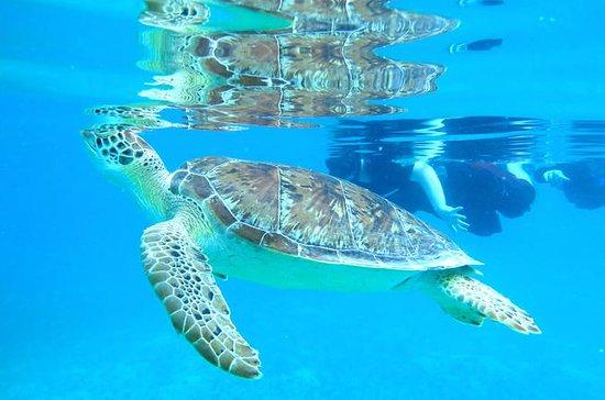 Kajak en zeeschildpad snorkelen met ...
