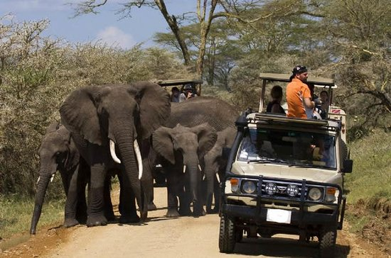 Safari de 4 días en Tanzania al lago...