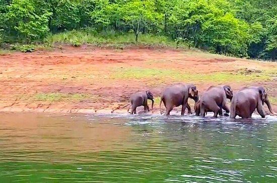 Private 5 Days Fabulous Kerala Tour...
