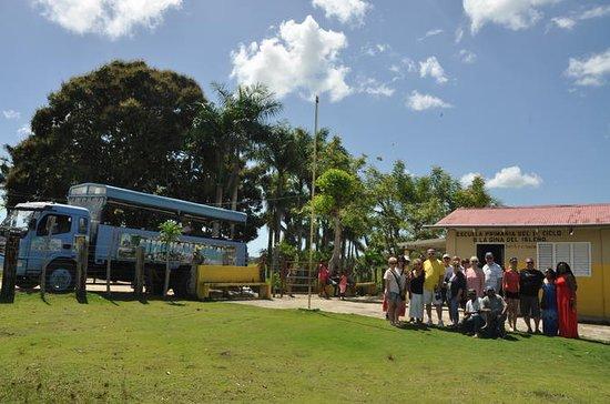 Safari tur halv dag fra Punta Cana