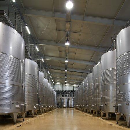 Armavir, Armenia: ...our winery