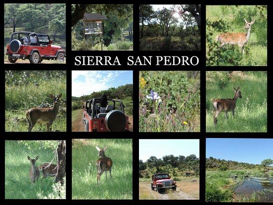 Casar de Caceres, Spain: Ruta 4x4 por Sierra de San Pedro