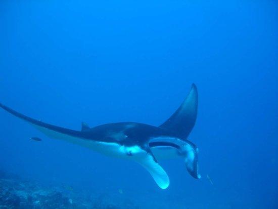Sub Oceanic Dive Club
