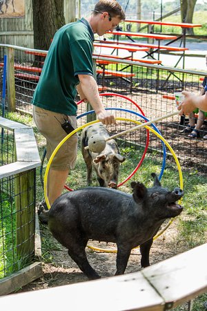 African Safari Wildlife Park: Did you know that HogWILD Education Show is included in your admission?