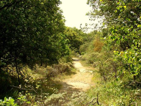 Duinreservaat Meijendel-Kievietsduin