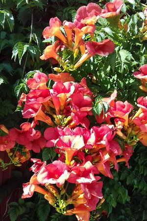 Labretonie, ฝรั่งเศส: Poolside shrub