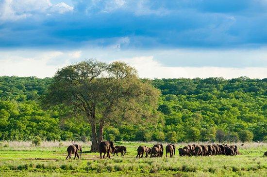 Zambezi National Park, Simbabwe: Herd of Elephant seen whilst staying at Zambezi Sands.