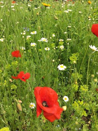 Helmsley Walled Garden照片