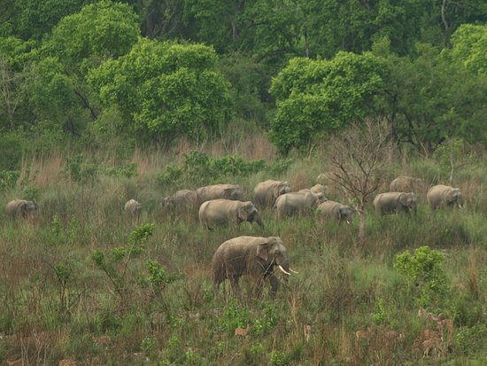 Asian elephants (and chital deer) - Bardia National Park