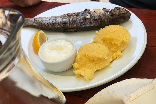 Arpasu de Sus, Rumänien: Grilled trout with polenta and garlic sauce