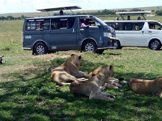 Karibu Safaris In Kenya