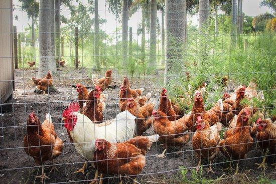 Marando Farms and Ranch