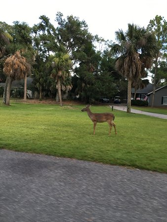 Fripp Island, Carolina del Sur: Wildlife on the Island