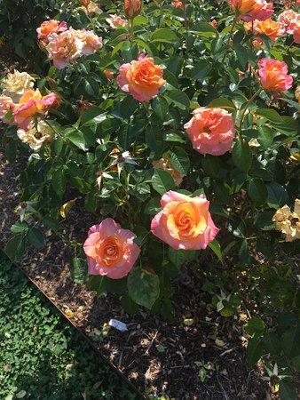 Norfolk Botanical Garden Foto