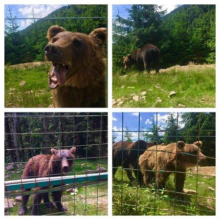 Rehabilitation Center of the Brown Bear